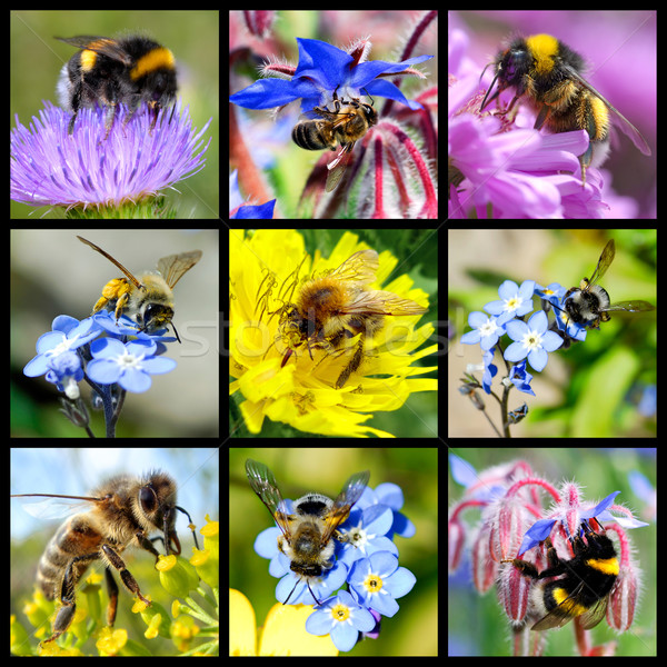 Bees and bumblebees mosaic Stock photo © Musat