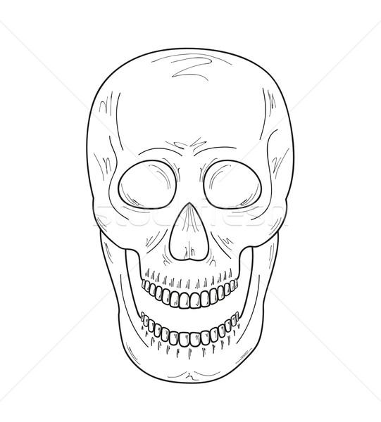 Kroki kafatası açmak ağız beyaz vektör Stok fotoğraf © muuraa