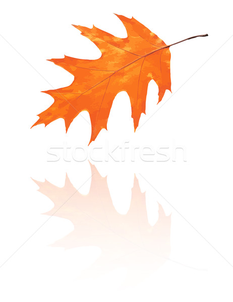 Meşe yaprak kırmızı turuncu renkler vektör Stok fotoğraf © muuraa