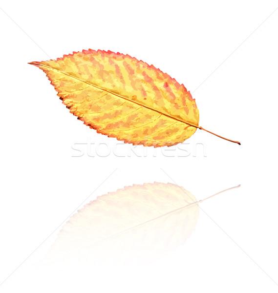 высушите лист оранжевый желтый цветами вектора Сток-фото © muuraa
