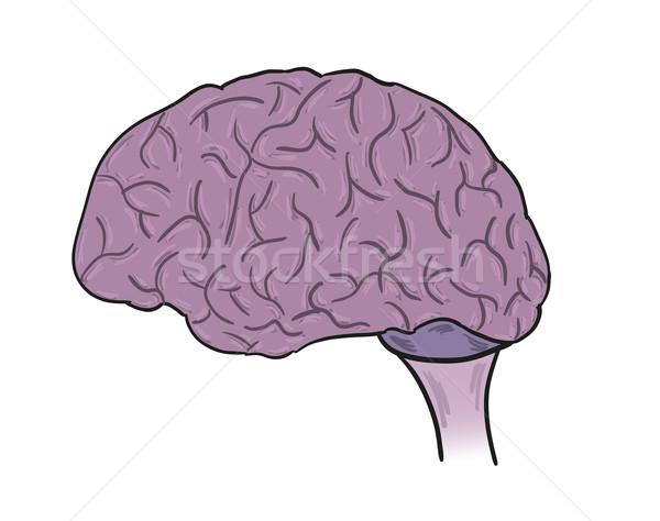Cérebro humano vetor desenho animado ilustração abstrato médico Foto stock © muuraa