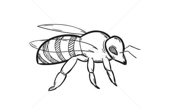 Um abelha esboço branco isolado livre Foto stock © muuraa