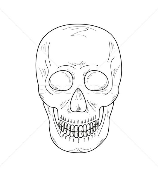 эскиз череп белый вектора улыбка медицинской Сток-фото © muuraa