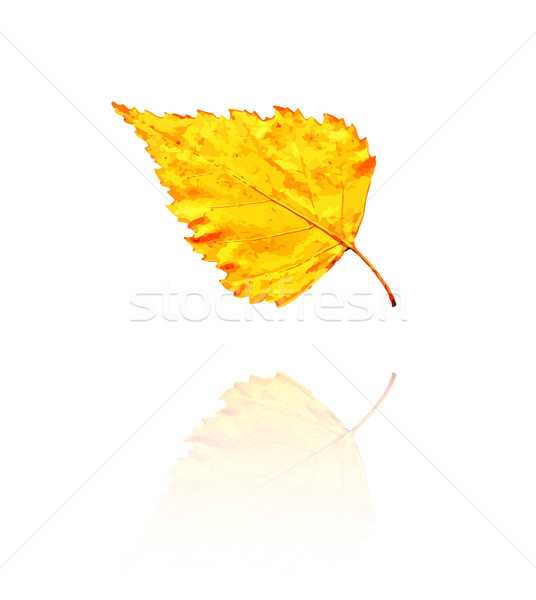 Nyírfa levél citromsárga narancs színek vektor Stock fotó © muuraa