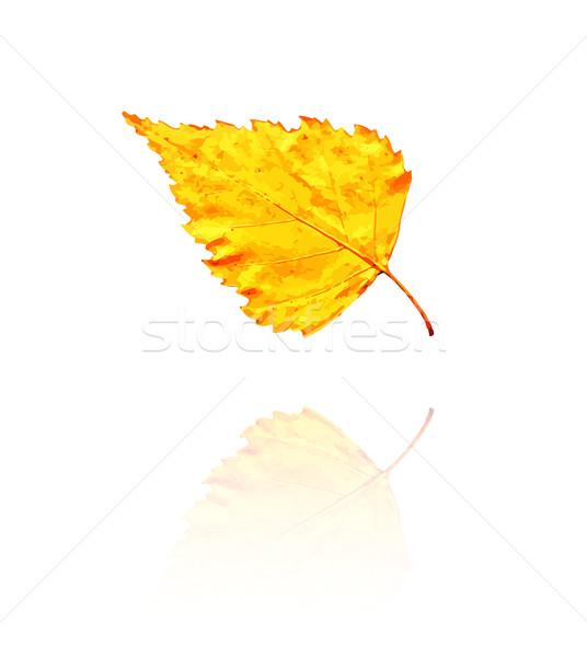 береза лист желтый оранжевый цветами вектора Сток-фото © muuraa