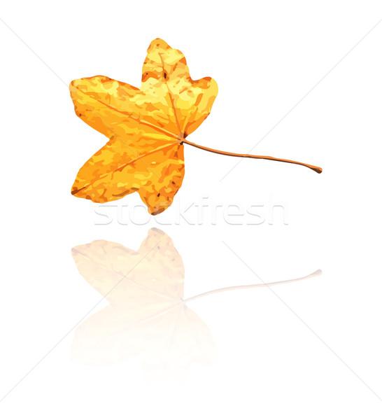 Dolce gum foglia giallo arancione colori Foto d'archivio © muuraa
