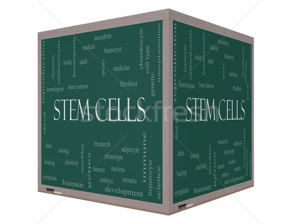 Stem Cells Word Cloud Concept on a 3D cube Blackboard Stock photo © mybaitshop
