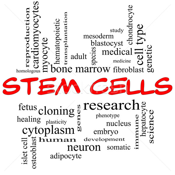 Stem Cells Word Cloud Concept in red caps Stock photo © mybaitshop