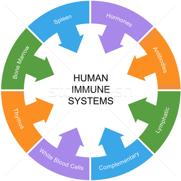 Immune System Word Circle Concept Stock photo © mybaitshop