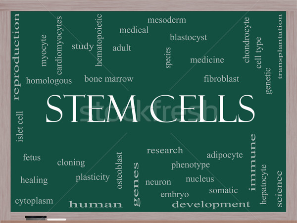 Stem Cells Word Cloud Concept on a Blackboard Stock photo © mybaitshop