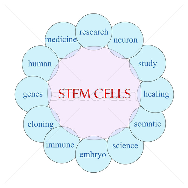 Stem Cells Circular Word Concept Stock photo © mybaitshop