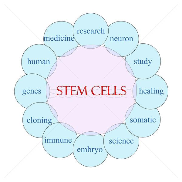 Stengel Rundschreiben Wort Diagramm rosa blau Stock foto © mybaitshop