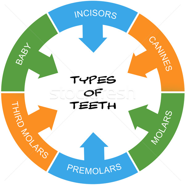Types of Teeth Word Circle Concept scribbled Stock photo © mybaitshop