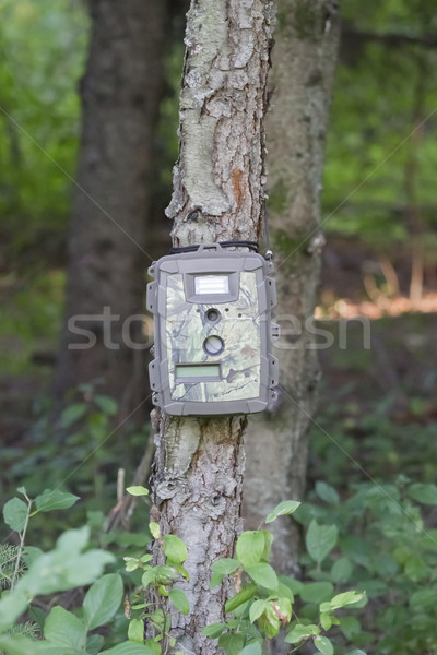 Camouflage Trail Cam on Pine Tree for Deer Hunting Stock photo © mybaitshop