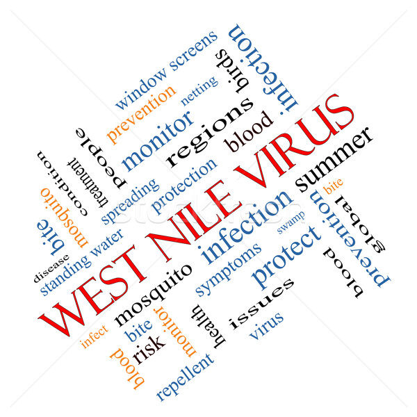 West Nile Virus Word Cloud Concept Angled Stock photo © mybaitshop