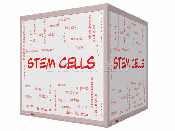 Stem Cells Word Cloud Concept on a 3D cube Whiteboard Stock photo © mybaitshop