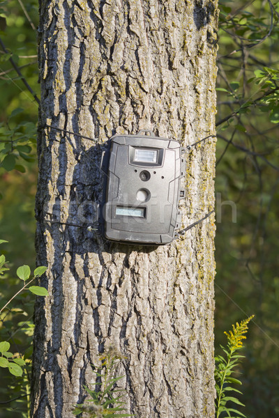 Black Trail Cam on Poplar Tree for Deer Hunting Stock photo © mybaitshop