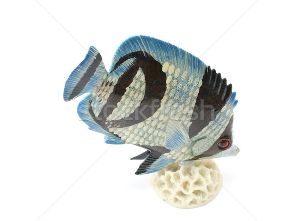 Tropical Fish Stock photo © mybaitshop