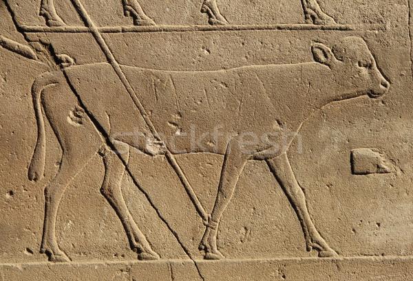 Egyptian hieroglyphic cow Stock photo © mybaitshop