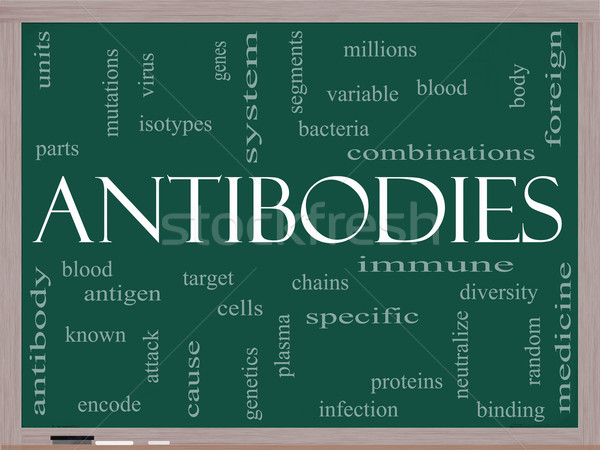 Antibodies Word Cloud Concept on a Blackboard Stock photo © mybaitshop