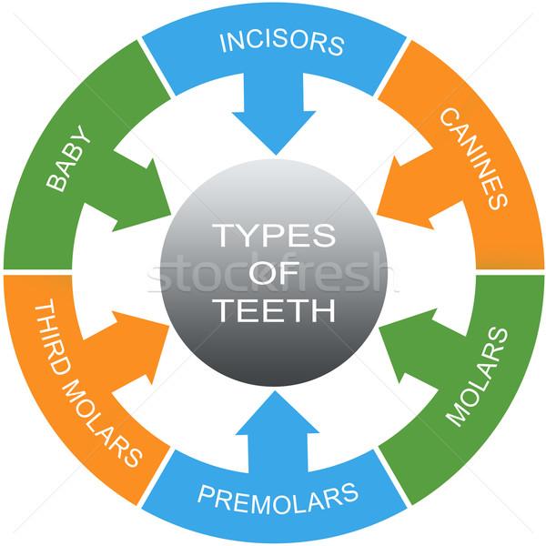 Types of Teeth Word Circles Concept Stock photo © mybaitshop