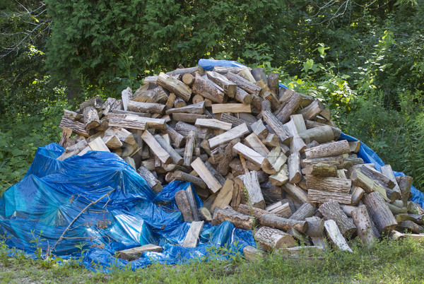 Huge Stack of Hardwood Logs split with tarp Stock photo © mybaitshop