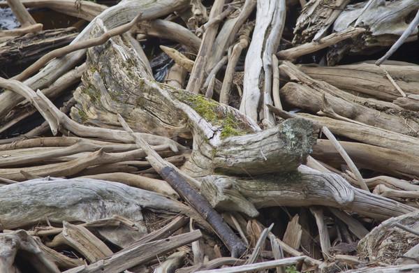 Driftwood brzegu rzeki w górę sztuki Zdjęcia stock © mybaitshop