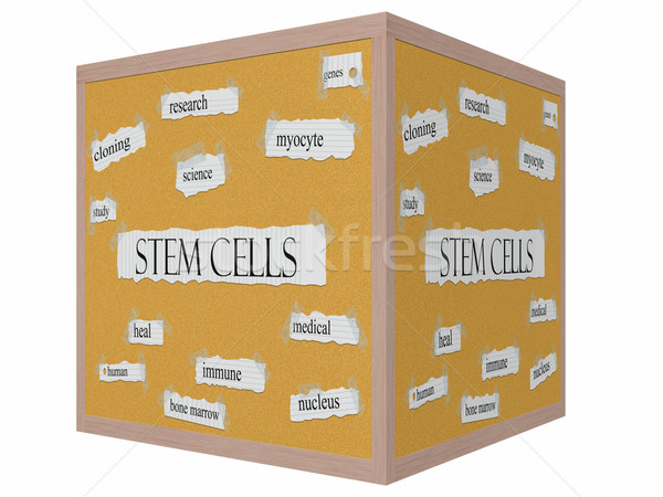 Stem Cells 3D cube Corkboard Word Concept Stock photo © mybaitshop