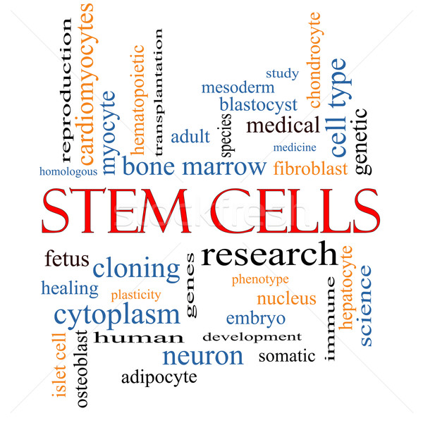 Stem Cells Word Cloud Concept Stock photo © mybaitshop