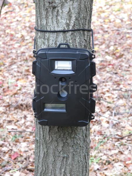Deer hunting trail camera  Stock photo © mybaitshop