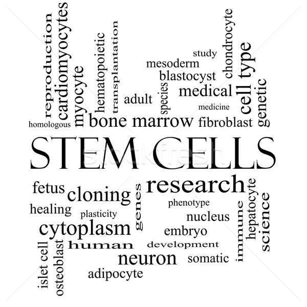 Stem Cells Word Cloud Concept in black and white Stock photo © mybaitshop