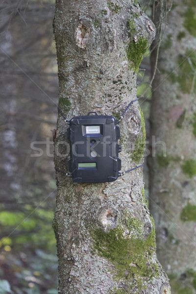Black Trail Cam on Pine Tree for Deer Hunting Stock photo © mybaitshop
