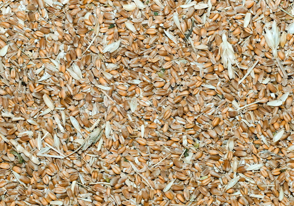 grains with husk as background Stock photo © mycola