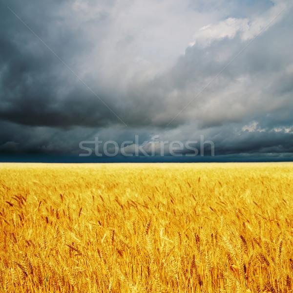 Buio nubi campo orzo pioggia panorama Foto d'archivio © mycola