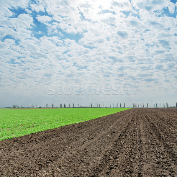 plowed and green fields under cloudy sky Stock photo © mycola