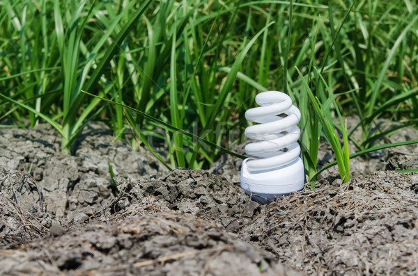 concept light bulb between drought land and green grass Stock photo © mycola