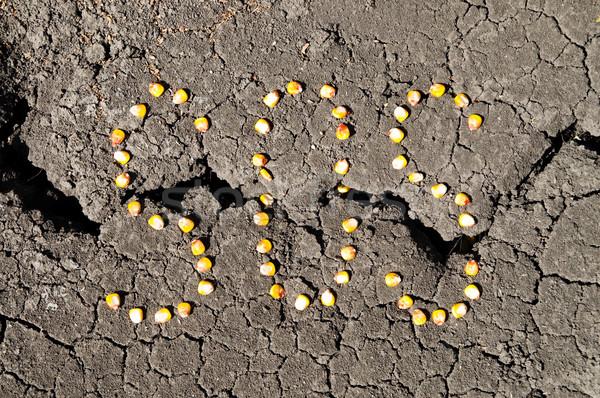 слово СОС кукурузы треснувший земле Сток-фото © mycola