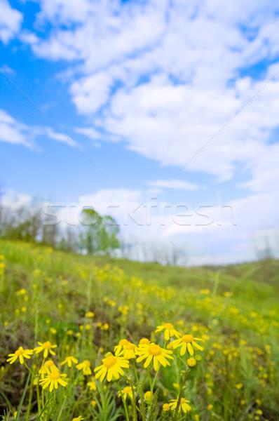 Flores verde prado céu flor grama Foto stock © mycola