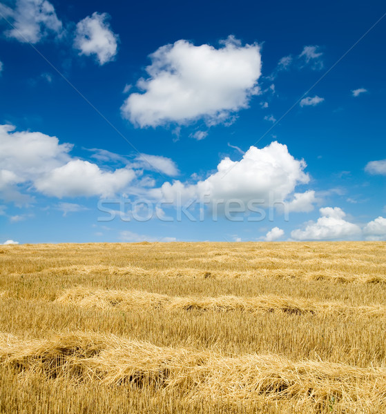 collected harvest on the field Stock photo © mycola