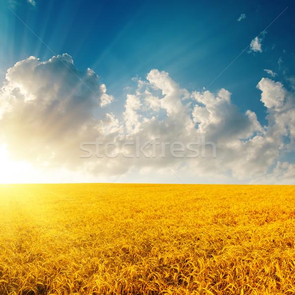 Złoty jęczmień wygaśnięcia mętny niebo słońce Zdjęcia stock © mycola