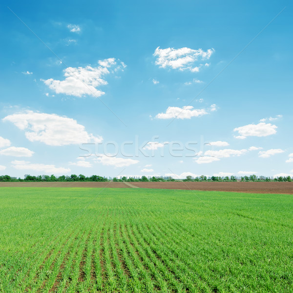 light clouds over green agriculture field Stock photo © mycola