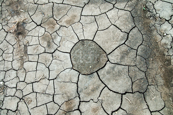 abstract background pattern of cracked dry soil Stock photo © mycola