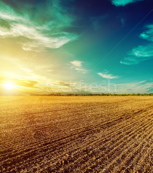 sunset in dramatic sky over plowed field Stock photo © mycola