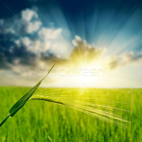 Verde pôr do sol céu grama natureza campo Foto stock © mycola