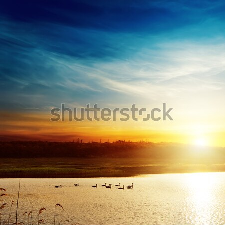 good sunset over field and river Stock photo © mycola