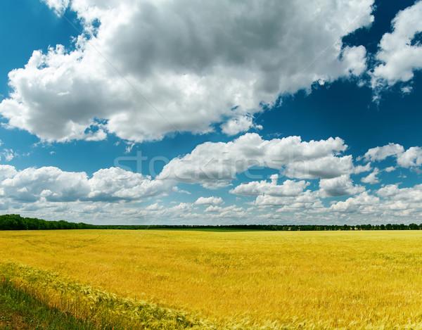 Arany mező aratás felhők étel természet Stock fotó © mycola