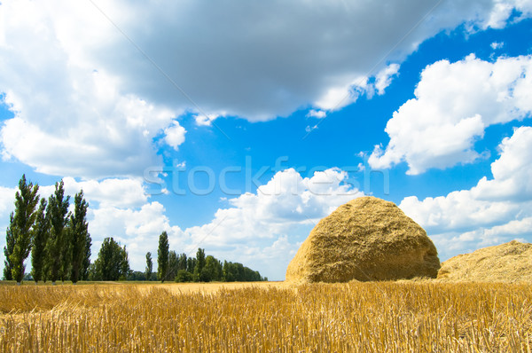 Kuru ot yığını saman hasat ağaç manzara Stok fotoğraf © mycola