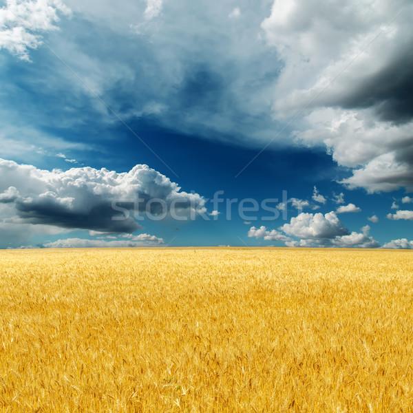 Foto stock: Dramático · céu · campo · dourado · colheita · paisagem