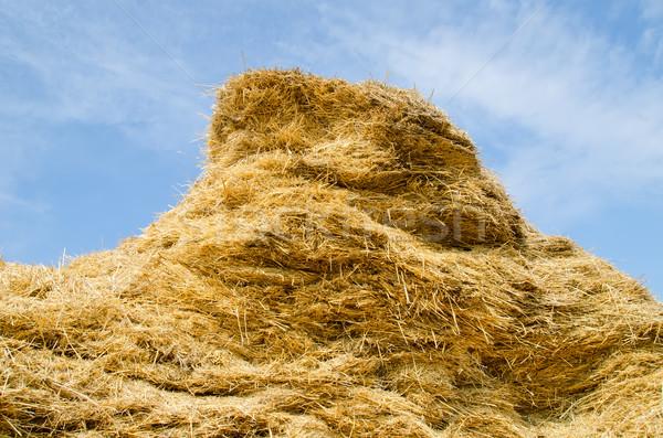 stack of straw Stock photo © mycola