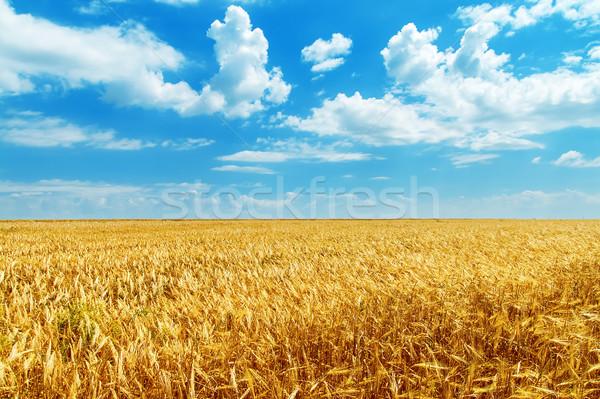 Cielo blu nubi campo panorama estate Foto d'archivio © mycola